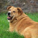 【自宅でチェック】簡単な犬の肥満チェック法【獣医師監修】