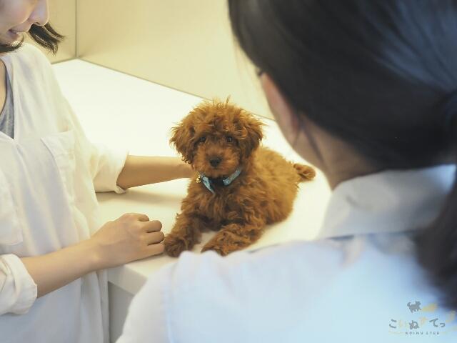 かかりつけの動物病院を受診する子犬