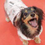 【豪雨の季節の前に】災害時に愛犬を守るため。今からできる対策のまとめ