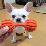 家族みんなで確認!愛犬との安全なおうち遊びのためのチェックポイント4つ