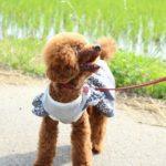 【散歩のしつけ】「子犬も飼い主も安全、楽しい!」を実現する2つの方法とは?