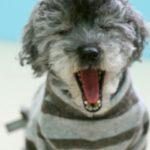 勘違いされがちな犬の行動5選