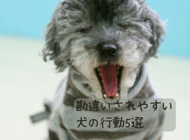 勘違いされやすい犬の行動