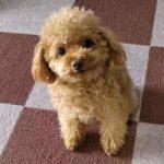散歩を嫌がる子犬。よくある3つの理由とその対策