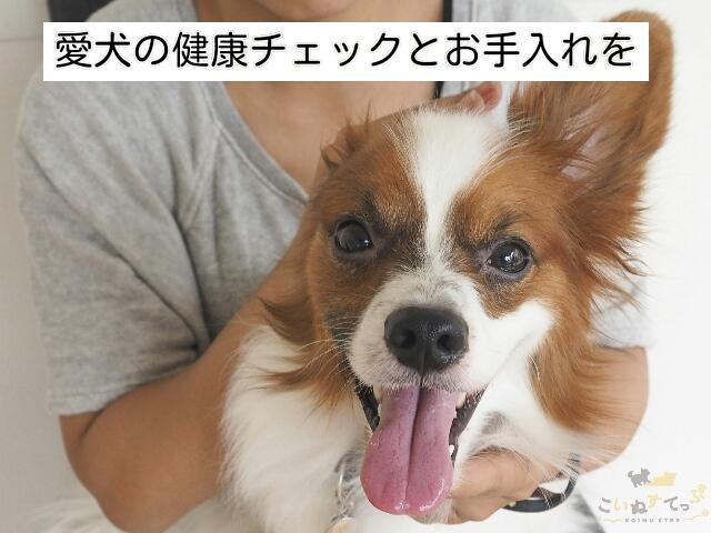 愛犬の健康チェックをしているところ
