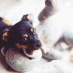 犬の留守番のしつけのコツは3つの準備と練習方法にあり!【獣医師監修】