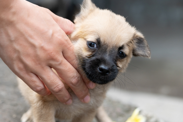 嫌な気持ちで甘噛みしようとする子犬への対策は嫌なことをしないこと