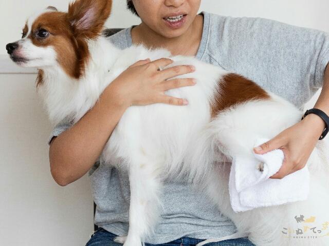 2週間に1度の頻度のシャンプーが難しいため体拭きをしている犬