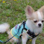 安全のために知っておくべき!子犬のリードの選び方【サイズ別・目的別に解説】