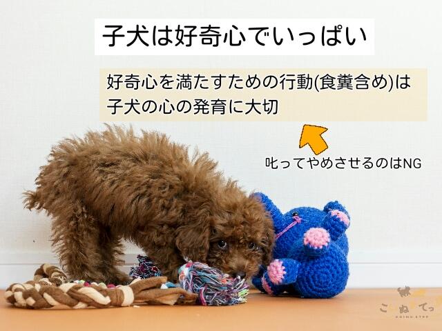 好奇心旺盛でうんちを食べることもする子犬