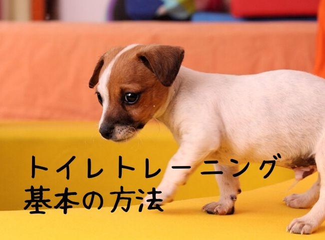 基本の方法でトイレトレーニングをしている子犬