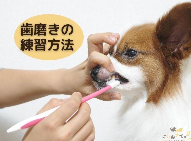 歯磨きを嫌がるので練習している犬