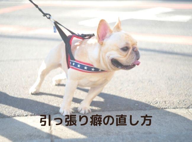 散歩で引っ張る癖のある犬
