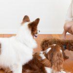 犬の社会化期はいつまで?絶対しておくべきことは?【獣医師監修】