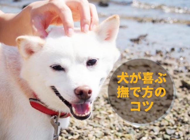 撫でられて喜んでいる犬