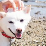 犬が喜ぶ撫で方のコツ【獣医師監修】
