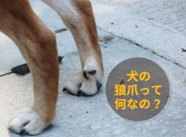 狼爪が見えている犬