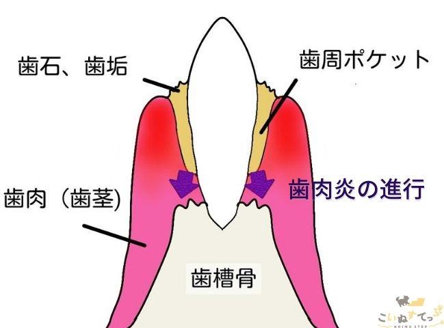 犬の歯周病の進行