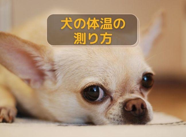 体温を測らなくてはならない犬