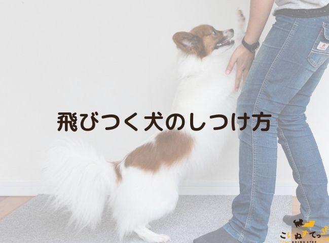人に飛びつく癖がありしつけが必要な犬
