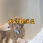 犬の膀胱炎とはどんな病気?ケアのポイントは?【獣医師監修】