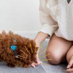 犬の伏せの教え方。5STEPでしっかりマスター