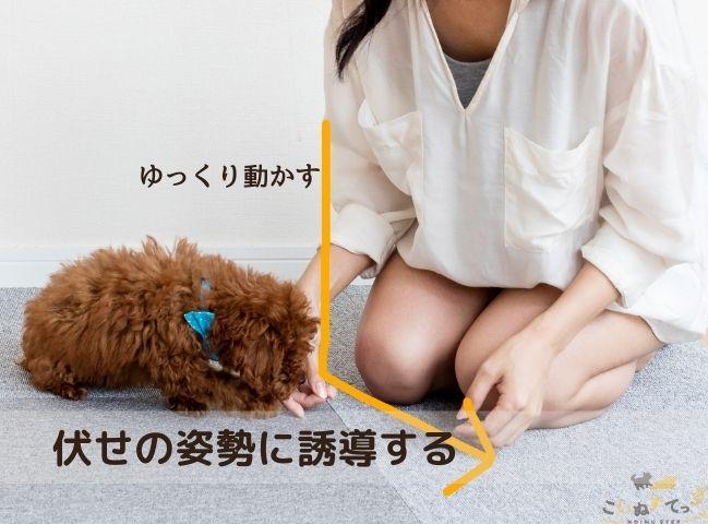 フセの姿勢を教わる犬