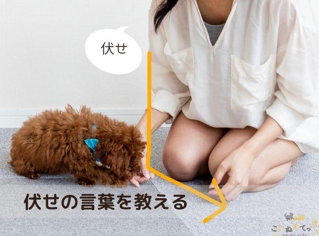 伏せの言葉を教わる犬