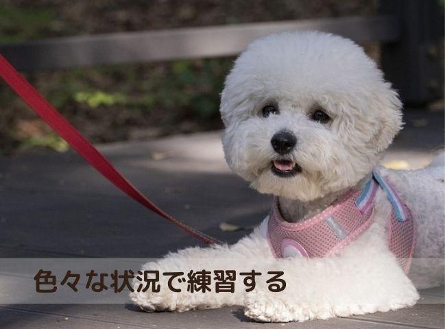 家の外で伏せの練習をする犬