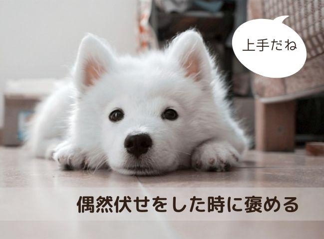 偶然フセをして褒められる犬