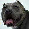「犬がハアハアしてる」よくある4つの理由と異常の見分け方【獣医師監修】
