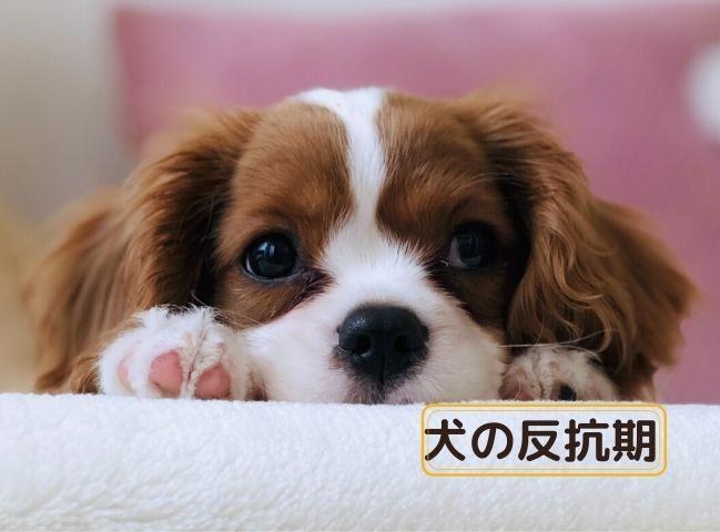 反抗期の犬