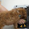 犬の「ハウス」のしつけ。効果的な練習方法は?【獣医師監修】