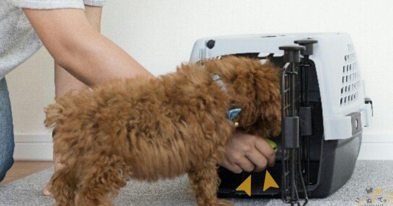 ハウスのしつけをしている犬
