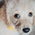 子犬の噛み癖にはしつけが必要?どう対応する?【獣医師監修】