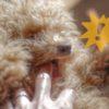 子犬が噛む5つの理由と絶対外せない対応のポイント【獣医師監修】