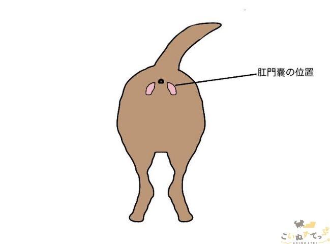 犬のにおいの原因となる肛門嚢