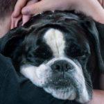 犬のにおいの原因と適切な対処法【獣医師監修】