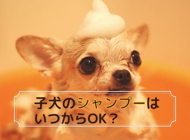 シャンプーをする子犬