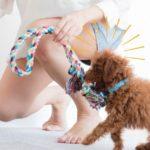 犬が夢中になる室内遊び3選と注意点