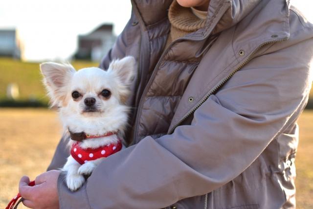 飼い主が多頭飼いをはじめたい小さなサイズの犬