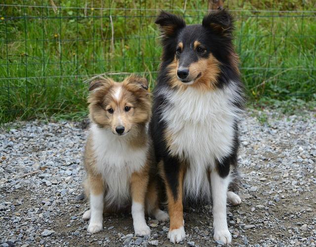 多頭飼いをはじめたときの年齢差がある犬たち