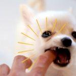 子犬の甘噛みのしつけ、どうするのが正解?【獣医師監修】