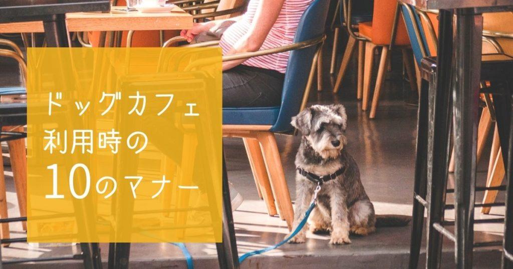 ドッグカフェに行くときのマナーを守っている犬