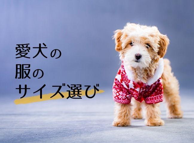 適切な服のサイズ選びをしている犬