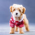 犬の服の上手なサイズの選び方