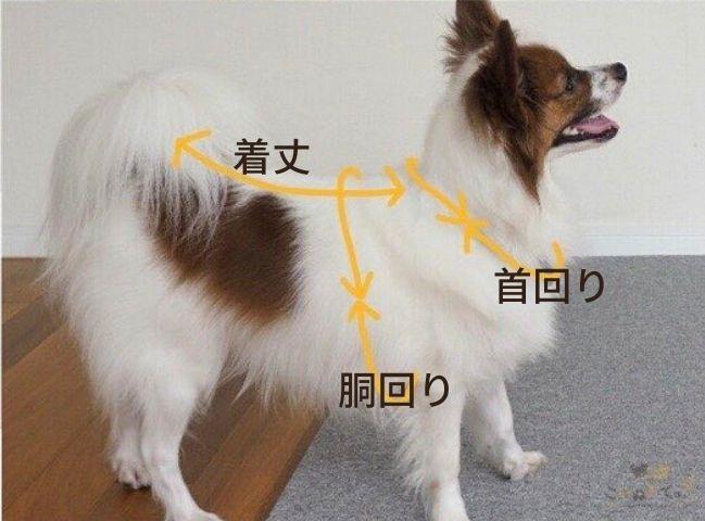 犬の服のサイズの測り方