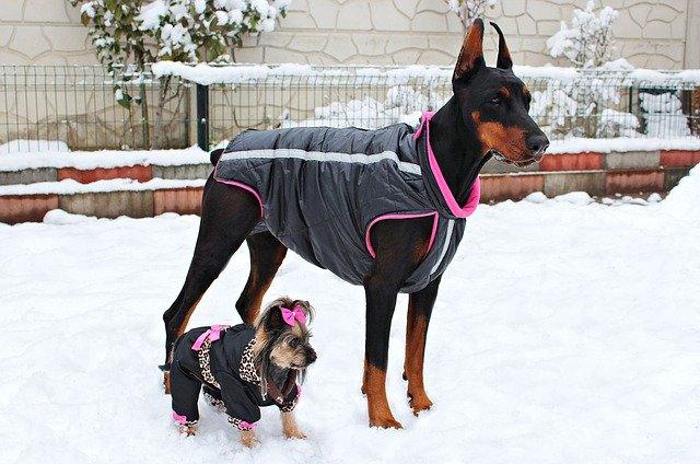 体格ばらつきがあり、服のサイズが異なる犬