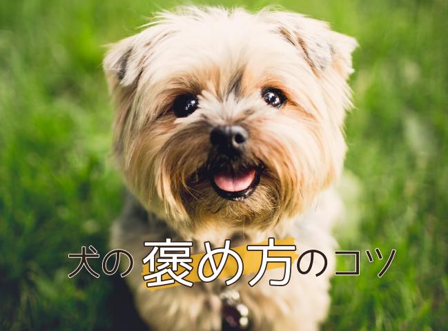 上手な褒め方をされている犬