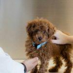 犬の健康診断の必要性、頻度や内容は?【獣医師監修】